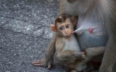 Khao Yai National Park | Nos Découvertes en Famille – Thaïlande