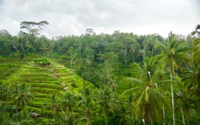 Bali   Nos Découvertes en Famille